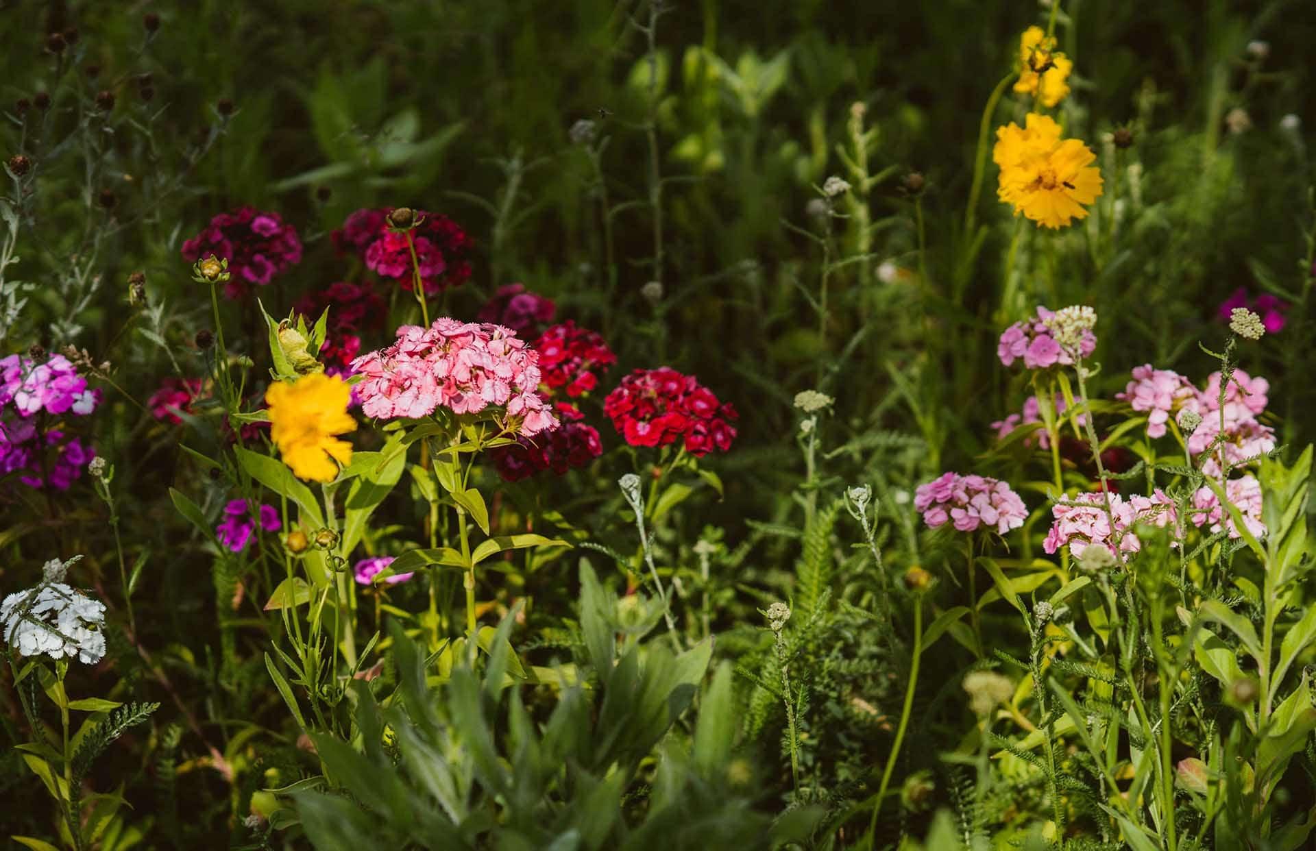 Blumen Reiter Roden