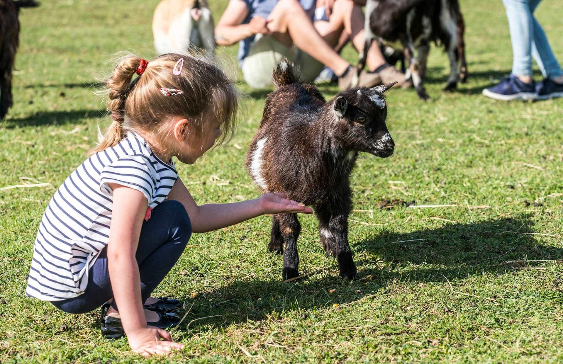 Mädchen beim Füttern einer Babyziege