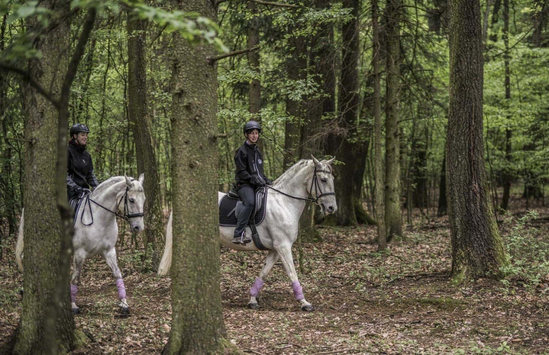 Frauen reiten auf Lipizzanern durch den Wald