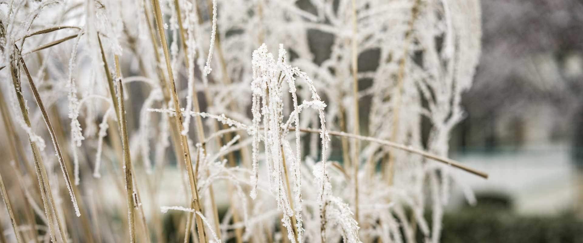 Winterlandschaft im Reserve