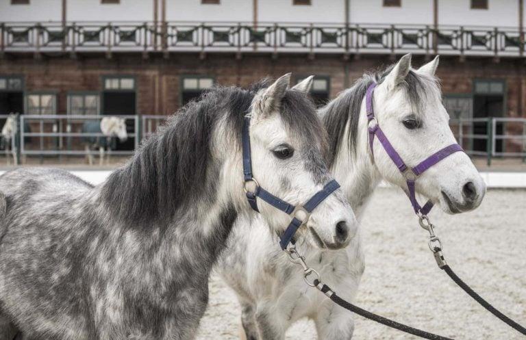 Pferde vor dem Pferdestall