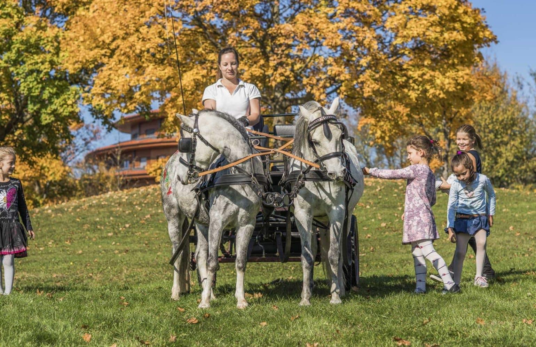 Kinder streicheln Pferde während der Kutschenfahrt