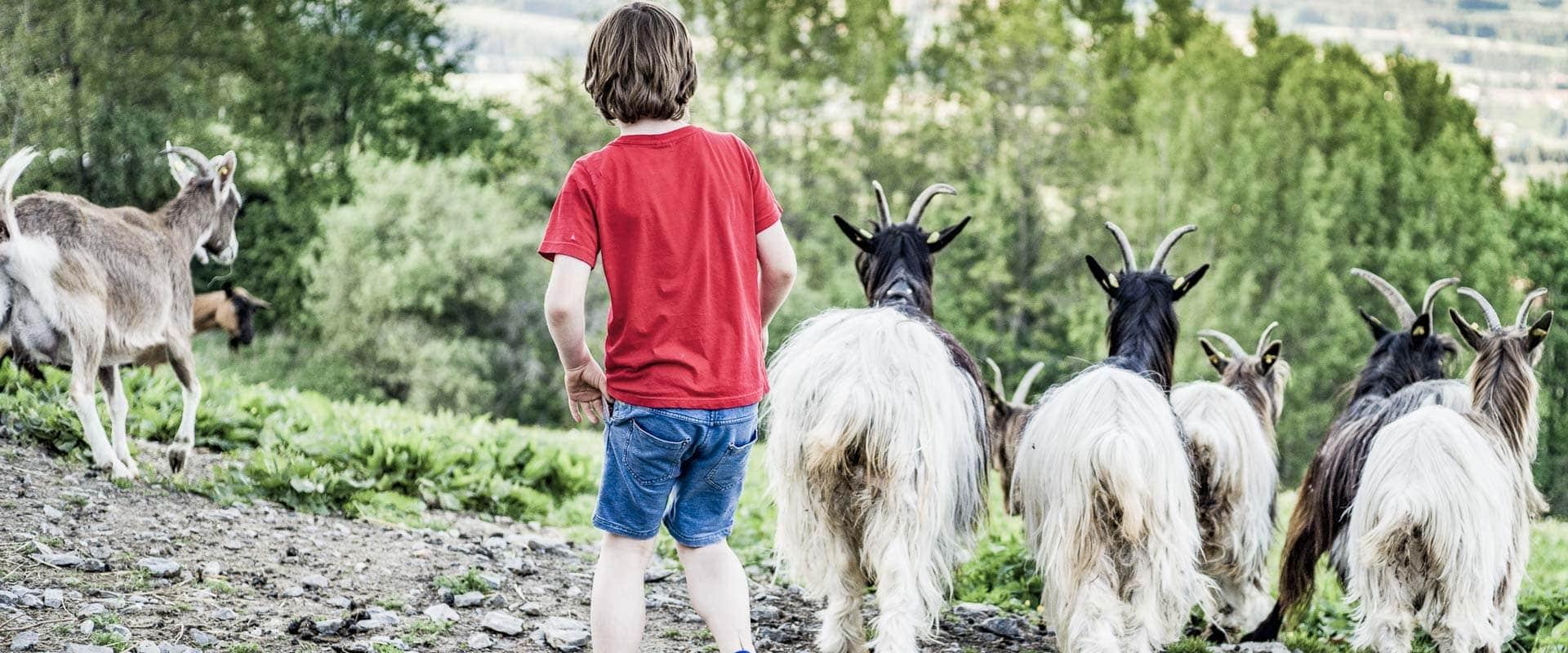Junge mit Ziegen im Reserve