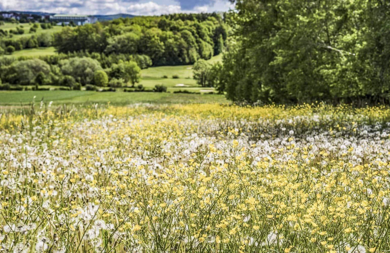 blühende Blumenwiese im Reiters Reserve