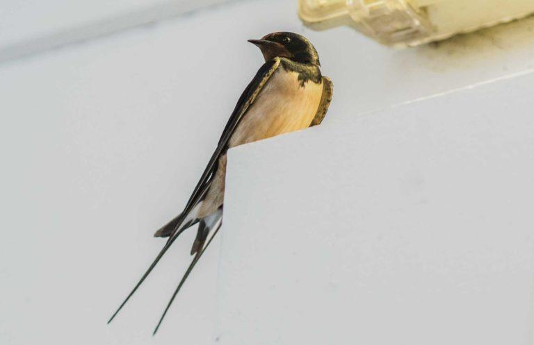 Vogel im Reiters Reserve