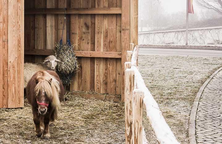 Pony und Schaf im Stall