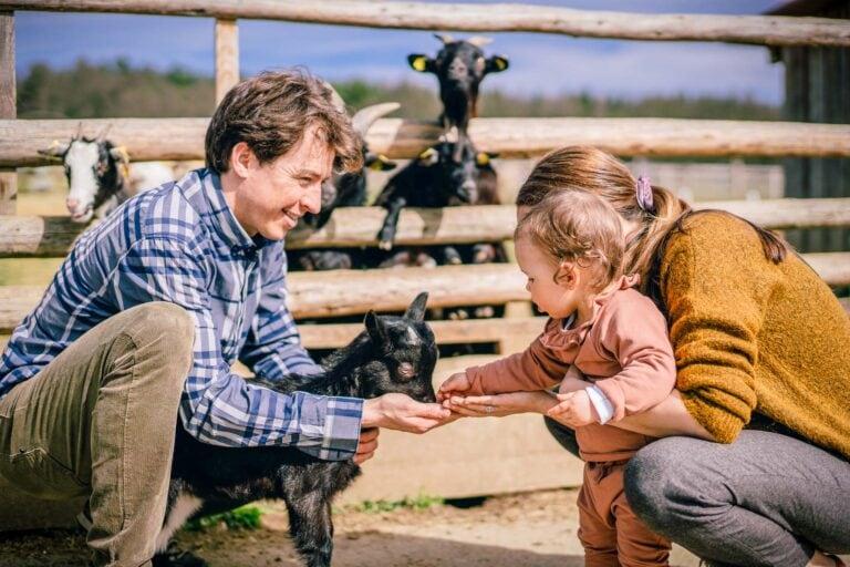 Familie beim Füttern der Babyziegen