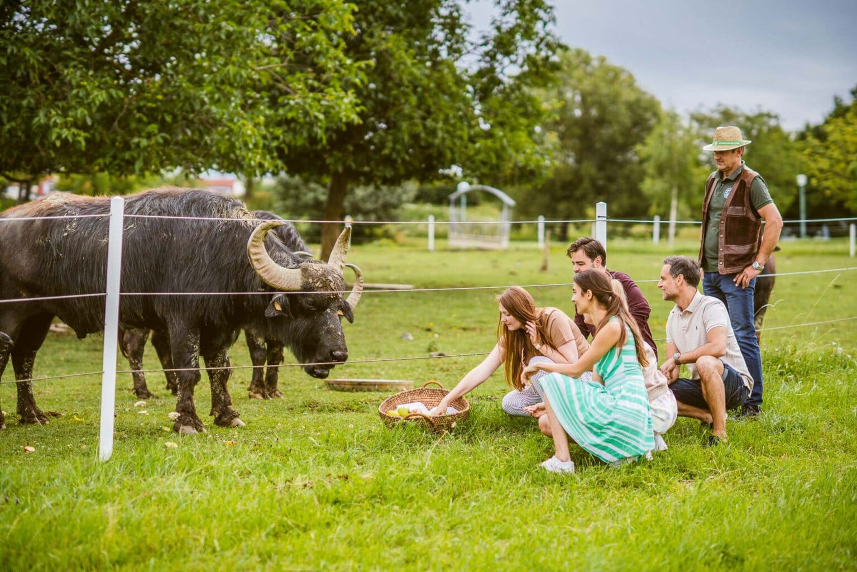 Tierfütterung Wasserbüffel