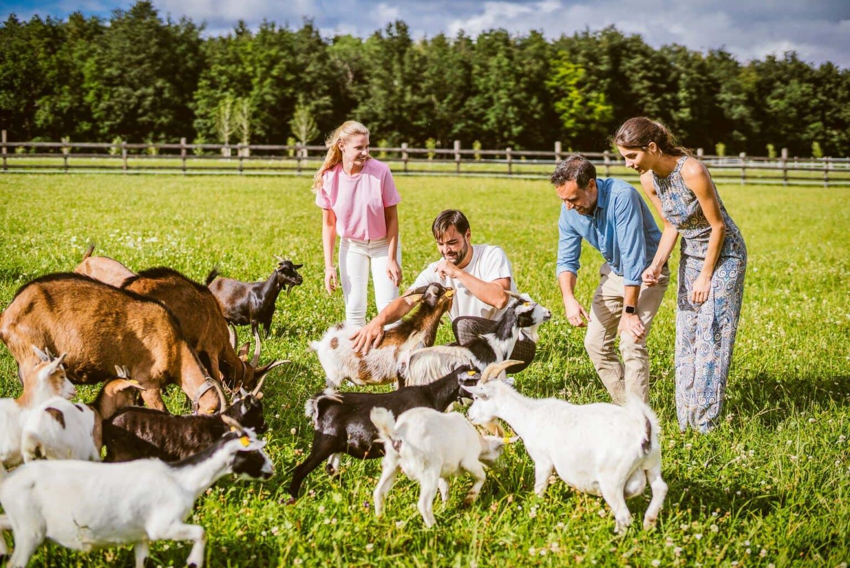 Hotelgäste besuchen Ziegen