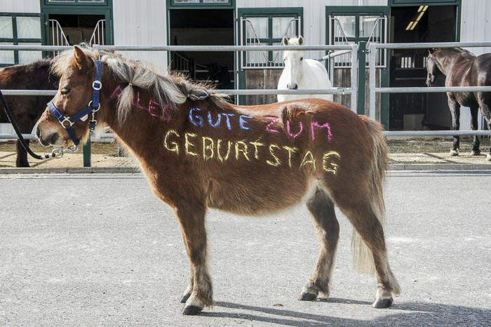 """Pony bemalt mit """"Alles Gute zum Geburtstag"""""""