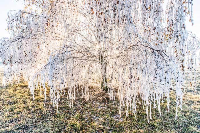 vereister Baum im Winter