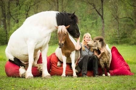 Zirkuslektionen Kurs für Pferde